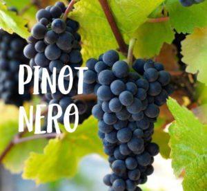 italian wine pinot nero