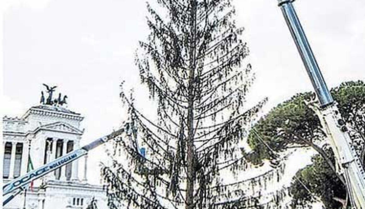 christmas tree rome